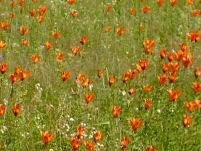 Vinnbergat 2006
